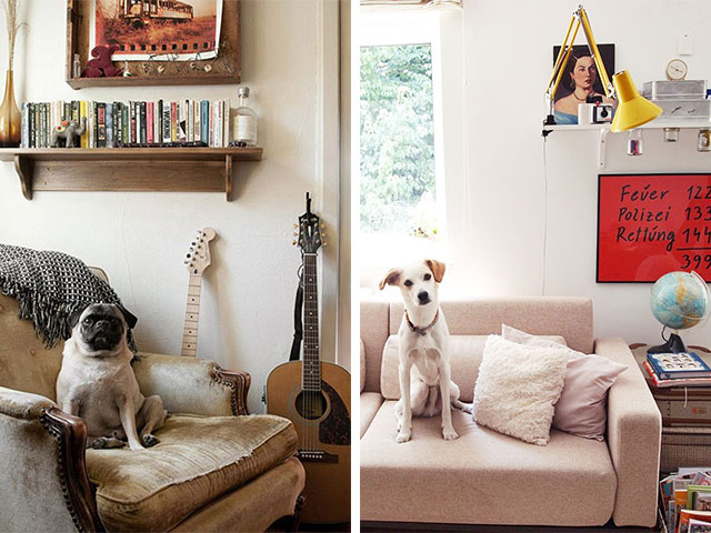 10 Reasons Why Your Home Should Have A Dog  A La Place -2772
